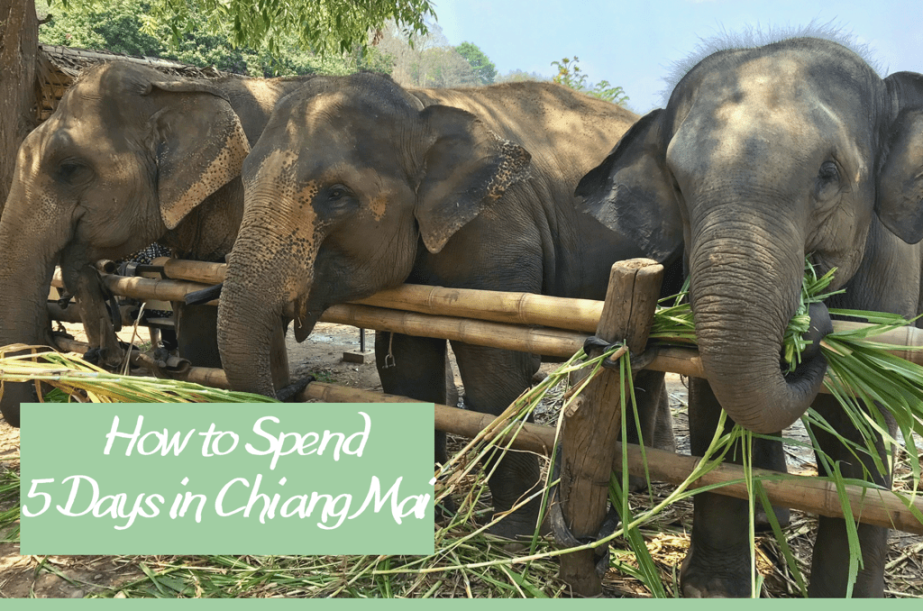 How to Spend 5 Days in ChiangMai